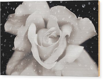 Wood Print featuring the photograph Raindrops On Sepia Rose Flower by Jennie Marie Schell