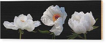 Raindrops On White Peonies Panoramic Wood Print by Gill Billington
