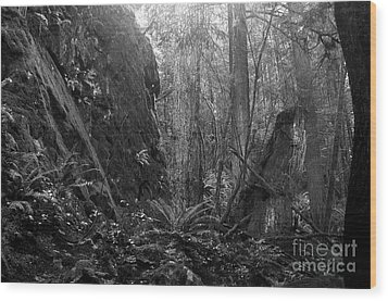 Wood Print featuring the photograph Rainforest Black And White by Sharon Talson