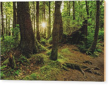 Rainforest Path Wood Print