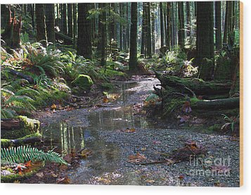 Wood Print featuring the photograph Rainforest Trail 2 by Sharon Talson