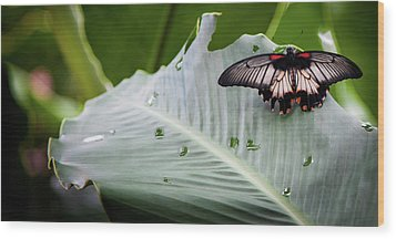 Wood Print featuring the photograph Raining Wings by Karen Wiles