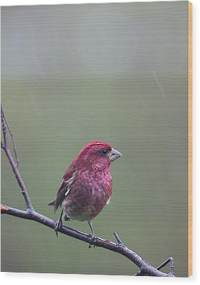 Wood Print featuring the photograph Rainy Day Finch by Susan Capuano