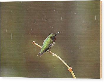 Rainy Day Hummingbird Wood Print