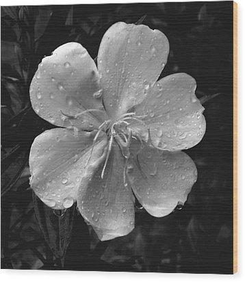 Rainy Days Wood Print by Amarildo Correa