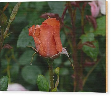 Rainy Rose Bud Wood Print