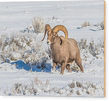 Wood Print featuring the photograph Ram In Rut by Yeates Photography