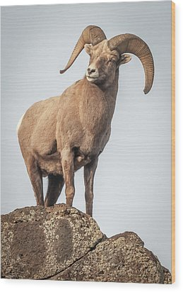 Wood Print featuring the photograph Ram Of The Rio Grande by Britt Runyon