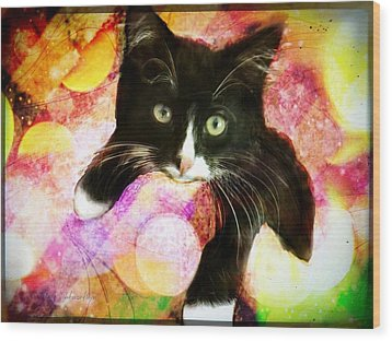 Rama The Miracle Cat Wood Print