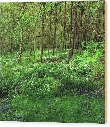 Ramsons And Bluebells, Bentley Woods Wood Print by John Edwards