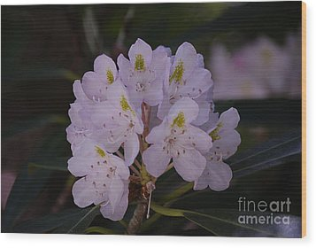 Randolph County Rhododendron Wood Print by Randy Bodkins