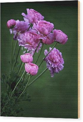 Ranunculus Wood Print by James Steele