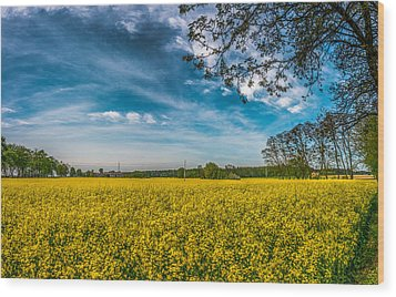 Rapeseed Field Wood Print
