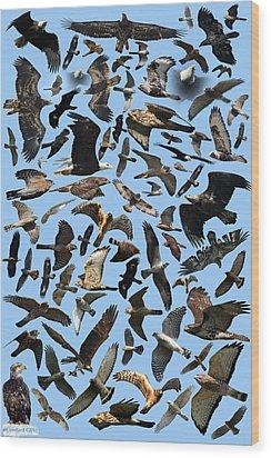 Raptor Roundup Wood Print by ML Lombard