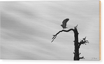 Wood Print featuring the photograph Raptor Silhouette by Joe Bonita