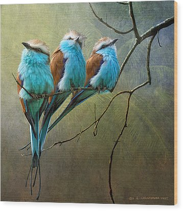 Raquet Tailed Rollers Wood Print by R christopher Vest
