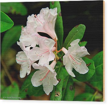 Wood Print featuring the photograph Rare Florida Beauty - Chapmans Rhododendron by Barbara Bowen
