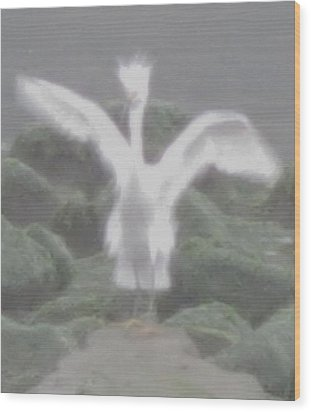 Wood Print featuring the photograph Rare Ghost Snowy Egret by John King