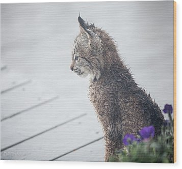Profile In Kitten Wood Print