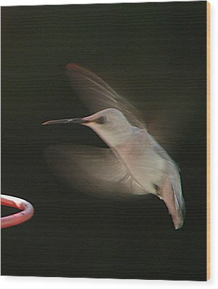 Wood Print featuring the photograph Rare White Hummer In Flight by Rick Friedle