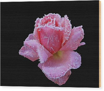 Rare Winter Rose Wood Print