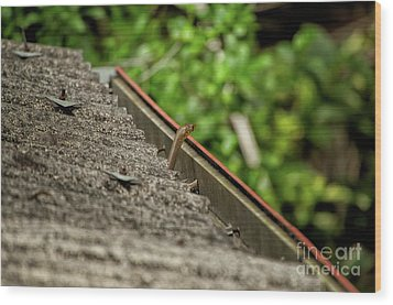 Rat Snake Wood Print by Venura Herath