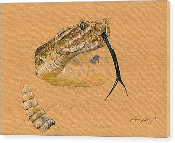Rattlesnake Painting Wood Print by Juan  Bosco
