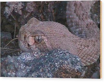 Rattlesnake Portrait Wood Print