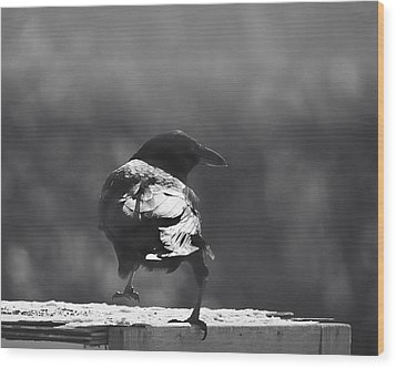 Wood Print featuring the photograph Raven In The Sun by Susan Capuano