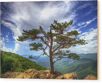 Ravens Roost Tree Wood Print by Greg Reed