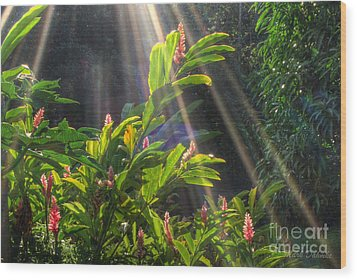 Rays Of Sunlight Wood Print
