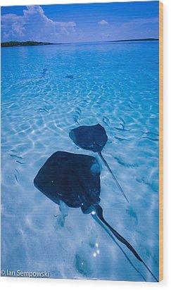 Rays Under Feet Wood Print