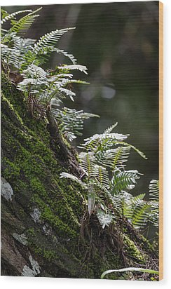 Reach For The Light Wood Print by Christopher L Thomley
