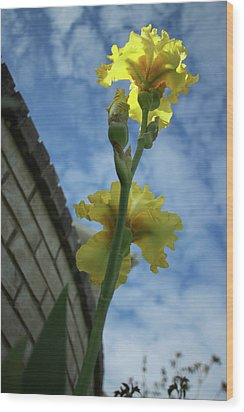 Reach For The Sky Wood Print by Jane Autry