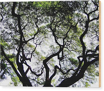 Reach For The Sky Wood Print by Karen Wiles