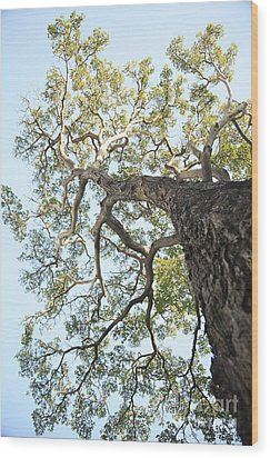 Reaching For The Sky Wood Print by Brandon Tabiolo - Printscapes