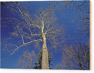 Wood Print featuring the photograph Reaching For The Sky by Suzanne Stout