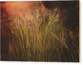 Wood Print featuring the photograph Reaching For The Sunset Dark by Mary Jo Allen