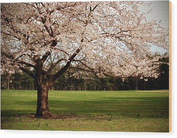 Reaching Out - Ocean County Park Wood Print by Angie Tirado