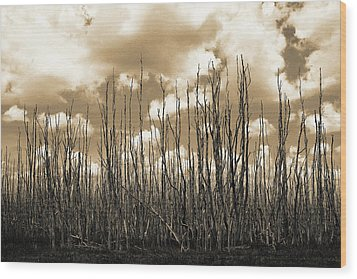 Reaching To The Sky Wood Print by Gary Dean Mercer Clark