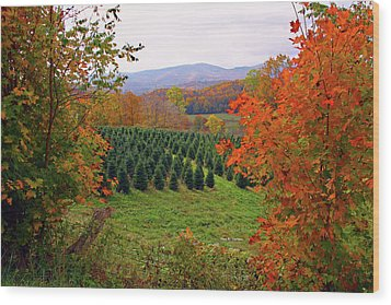 Ready For Christmas Wood Print by Dale R Carlson