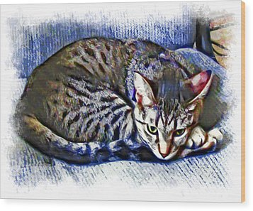 Ready For Napping Wood Print by David G Paul