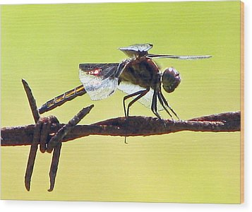 Ready For Takeoff Wood Print by Lonnie Tapia