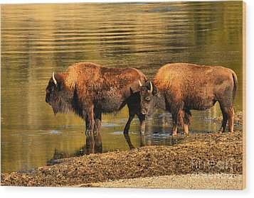 Wood Print featuring the photograph Ready To Cross The Yellowstone by Adam Jewell