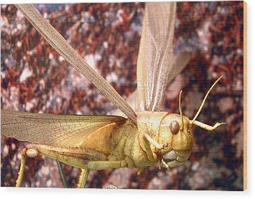 Ready To Swarm Wood Print by Jez C Self