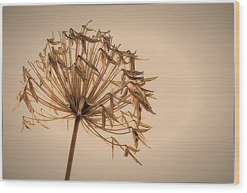 Wood Print featuring the photograph Reap What You Sow by Tim Nichols