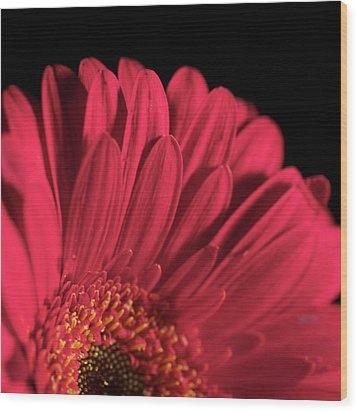 Wood Print featuring the photograph Red 4 by Sheryl Thomas