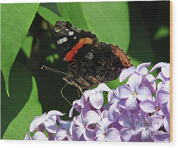 Red Admiral Butterfly Wood Print by Deborah Johnson