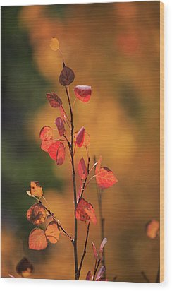 Wood Print featuring the photograph Red And Gold by David Chandler