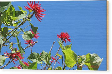 Red And Green San Diego Flowers Wood Print by Doreen Whitelock